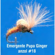 Emergente Pupa Ginger